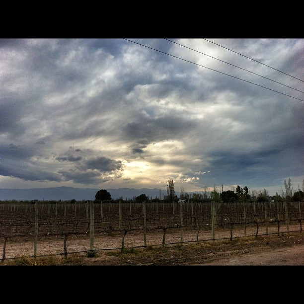 Sun setting over the vineyards of Maipu, Mendoza