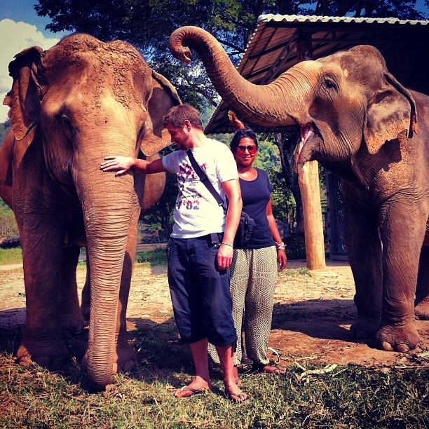 Beauties. Elephant sanctuary, Chiang Mai.